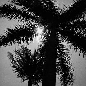 EX-P700 Palm Trees.