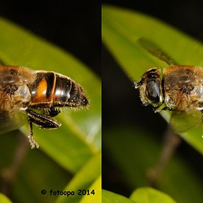 A few insects in-flight 2014, 3D cross-view.
