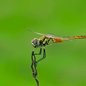 A dragonfly with pleasing background - Coolpix P610