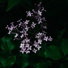 Leica X Vario, meet spring