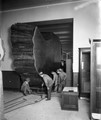 American Museum of Natural History photo archive now online