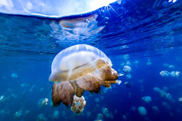 In photos: Swimming with jellyfish