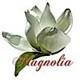 Magnoliae