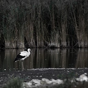 Stork from bird sanctuary