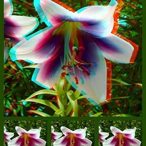Extreme popout 3D images (Lumix 3D1)