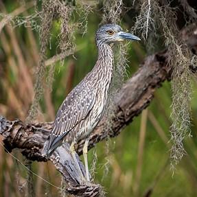 Wildlife Photos D750 300mmf/4 & TC 1.4