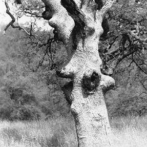 "A strange tree: ""Dryad appealing to Zeus"""