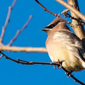 Birding with D750 + 70-200/4 + TC-20E iii