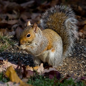 Squirrel with the Tamron 150-600