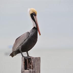 Tamron 150-600 mm: Birding in Southwest Florida.