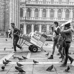 More Pigeons Than People - St. Mark's Square, Venice