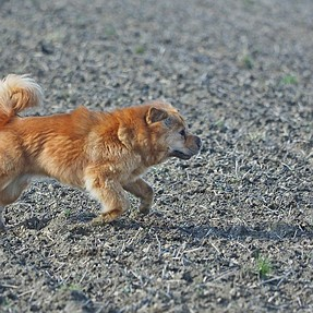 E-M1 on FE 3.0 shoots my eratically moving dog Miss MoneyPenny
