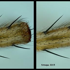 Cross-view leg small spider.