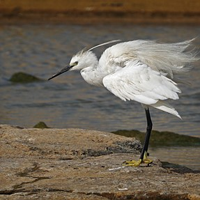 Take a look - you won't EGRET it :-)