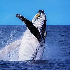 Whale of a time at port stephens