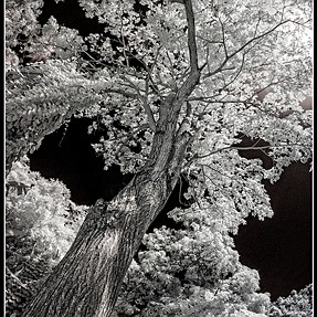 Infrared Sony a100