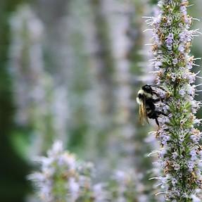 Bee seeing. C&C please