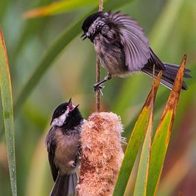 Morning Birding at Marymoor