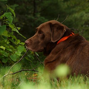 A77, dog, Gary Fong flash diffuser...