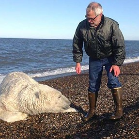 Biologists and Locals Free Polar Bear Trapped By Fishnet