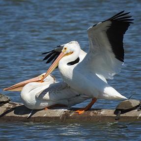 P900 A Few More Birds