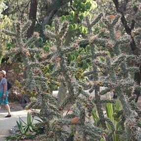 Samsung NX1 4K Video: Cactus Garden