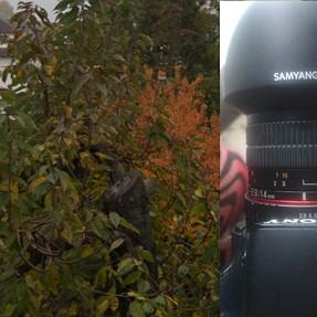 Samyang 14mm not reaching infinity focus