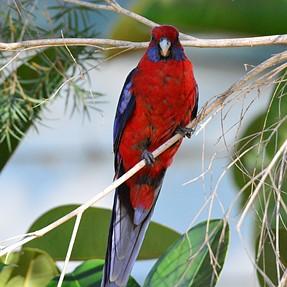 Birds From The Backyard