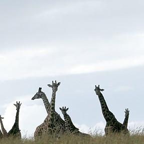 Wildlife shot for critique