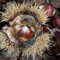 Sample photo