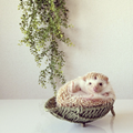 The 10 best pet accounts on Instagram